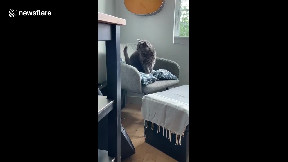 item: 'Cat vs Tail: Frustrated cat from Canada tries to bite its own tail'