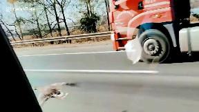 item: 'Wild goose flies alongside vehicles on Chinese highway'
