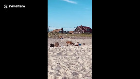 item: 'Curious deer approaches man sitting at the beach in Fire Island, New York'